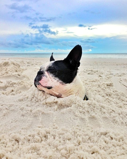 Dog in Sand