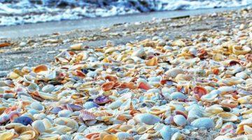 Sanibel Island FL – The World's Best Shelling Beaches