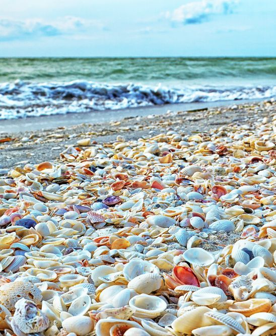 Sanibel Island Shells on the Beach