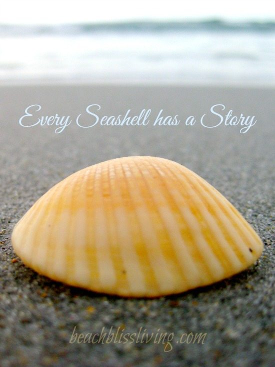 Seashell Quote