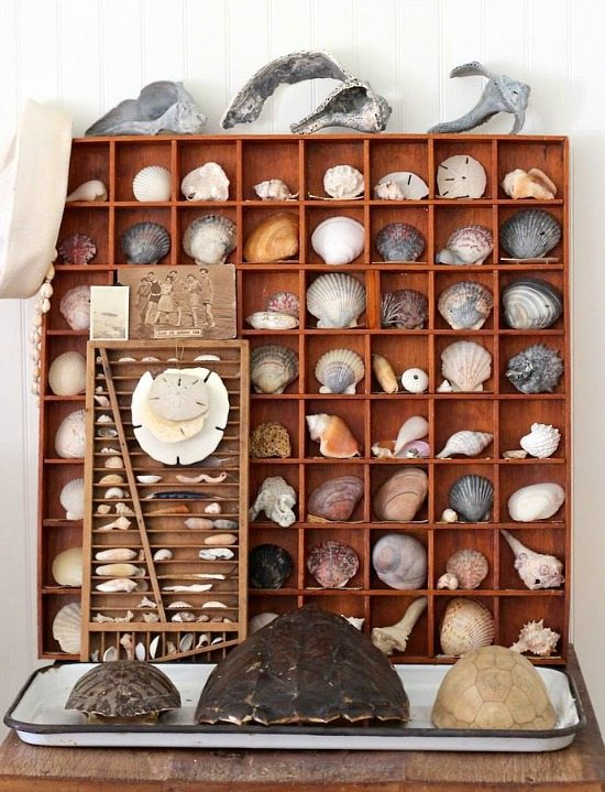 Beach Memory Shell Decor Idea