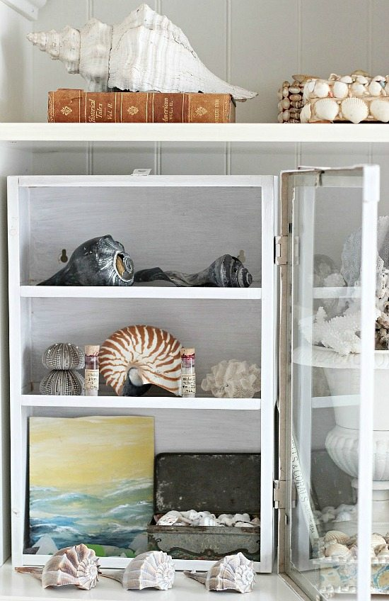 Shell Decor in a Glass Cabinet on a Shelf