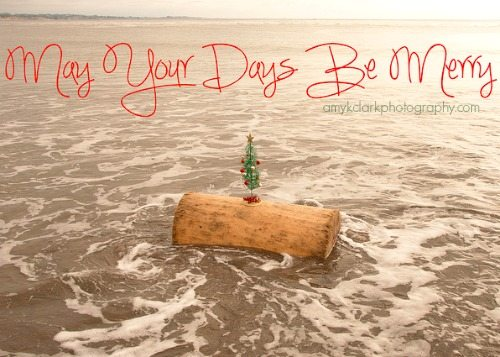 Mini Christmas Tree on the Beach
