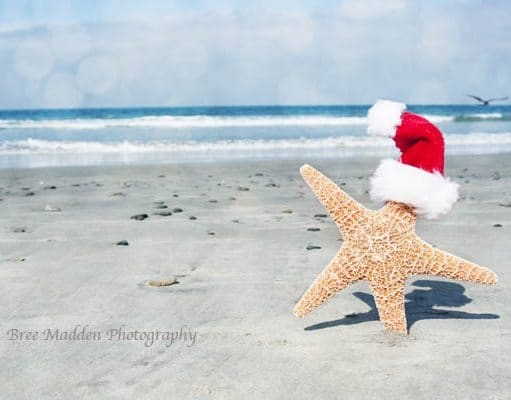 Starfish with Santa Cap