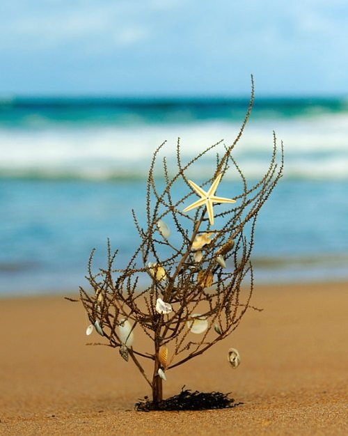 Tumble Weed Christmas Tree on the Beach