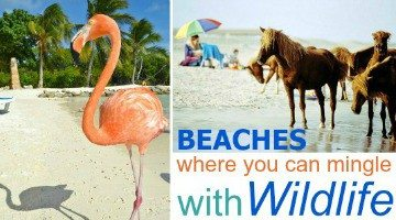 Beaches where you Can Mingle with Wildlife