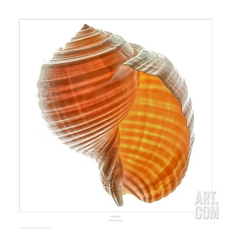 Seashell Art Photography