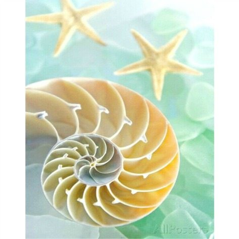 Seashell Interior Photo and Sea Glass